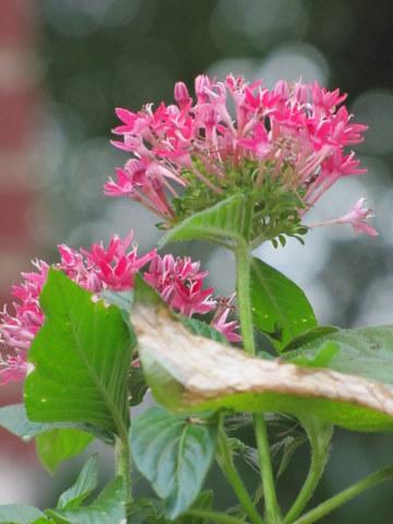 Pink Flower Front Garden