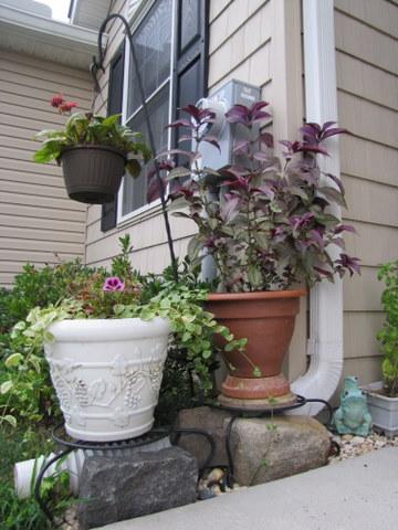 Decorative Potted Plants