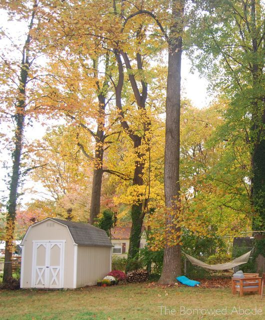 Fall Back Yard 2012 | The Borrowed Abode