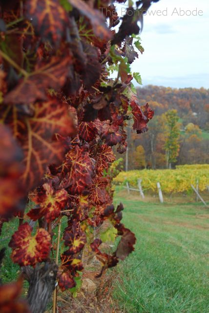 Wine Grape Leaves Burgundy Linden Oct 2012 | The Borrowed Abode
