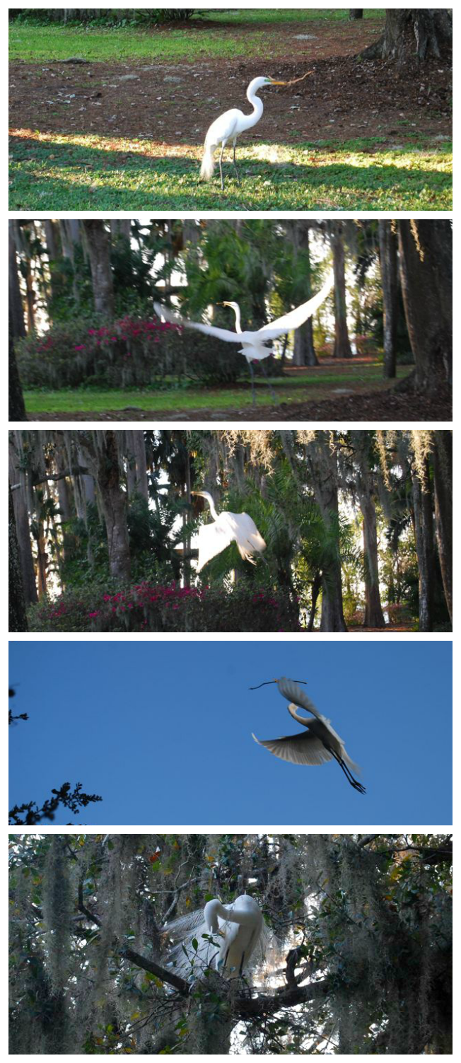 Snowy Egret Kraft Azalea Garden | The Borrowed Abode