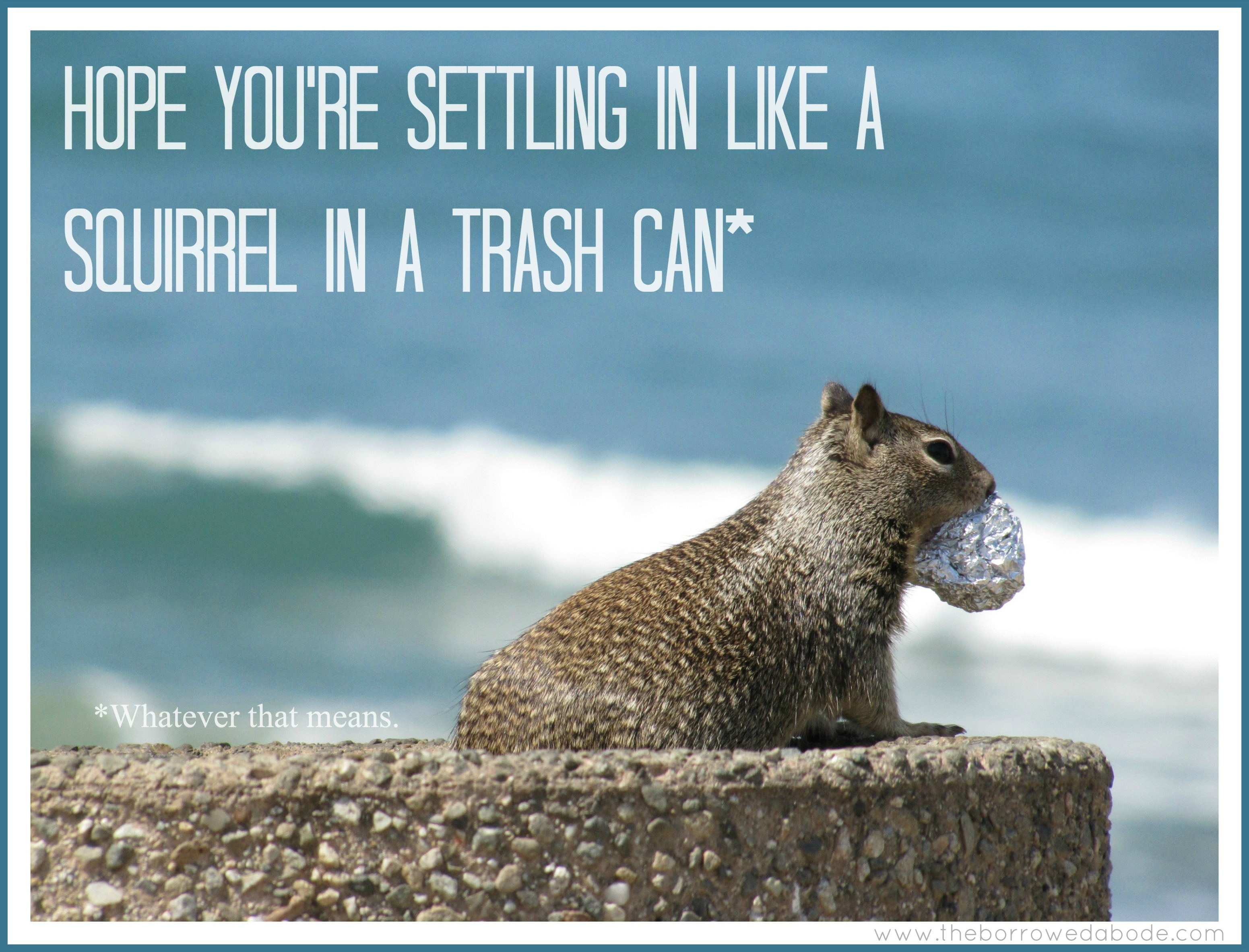 Squirrel Greeting Card | The Borrowed Abode