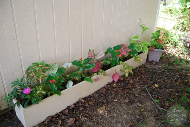 Long Planter Boxes3