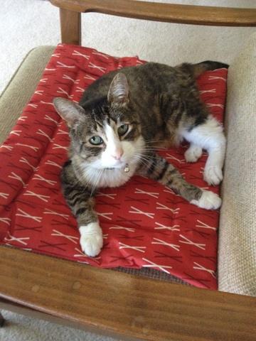 Doctor on Catnip Cuddler