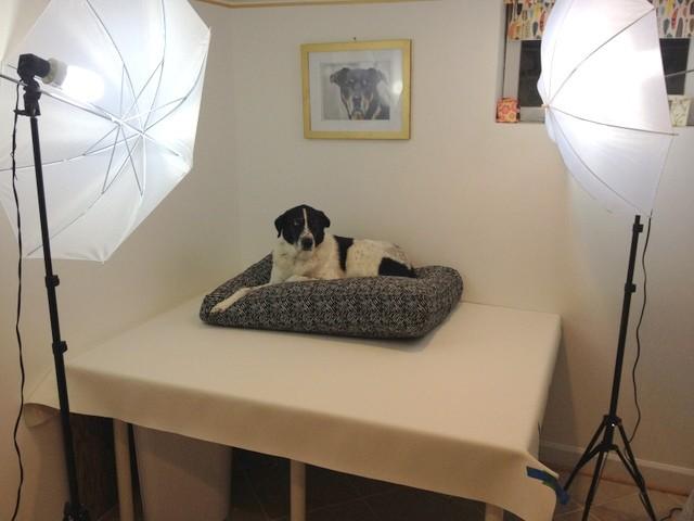 Janery Photo Backdrop Lighting Kit