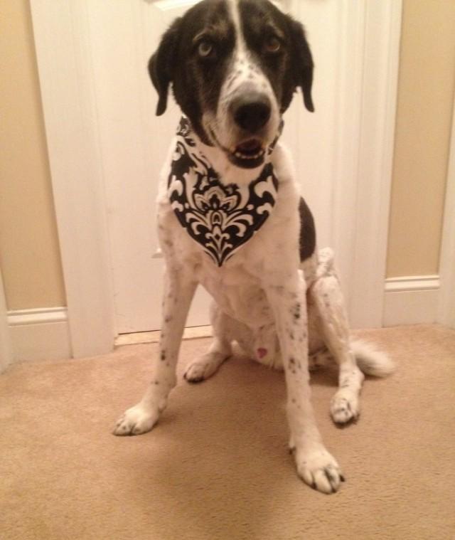 WITL Merlin Dog Collar Bandana