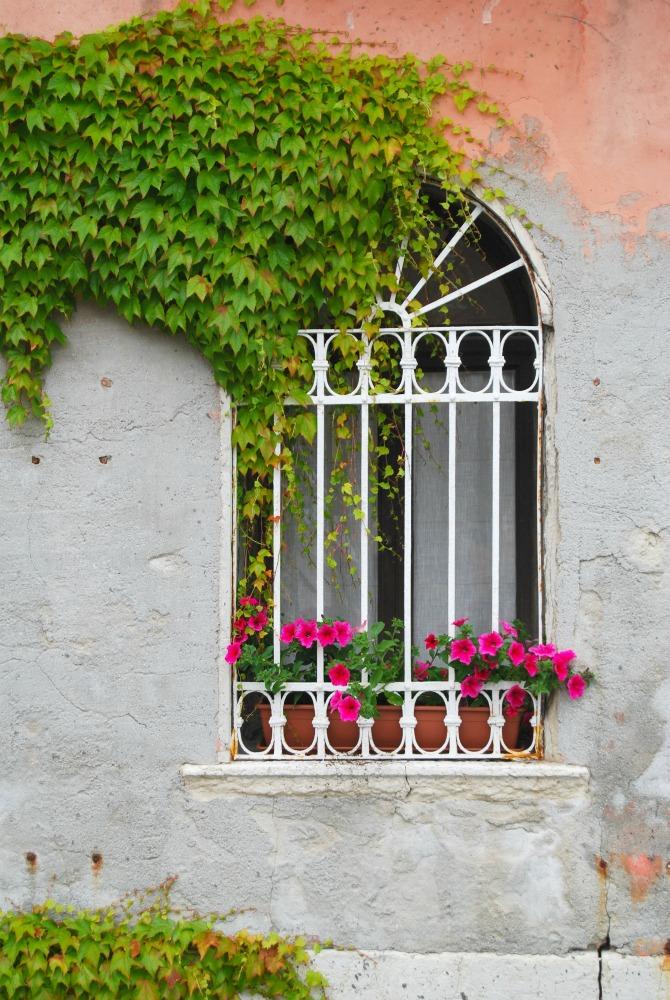 2016 Italy Venice Window Ivy Stucco